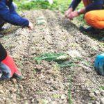 週末に農業と林業が学べる農業学校